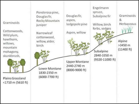 vegetation elevation