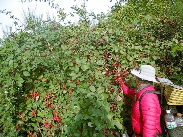 Fidg berries